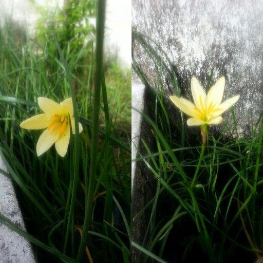 Flower....บัวดิน