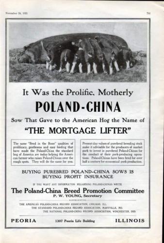 1921 POLAND-CHINA SOW PIG FARM PIG COUNTRY AD7015 | Pig ...