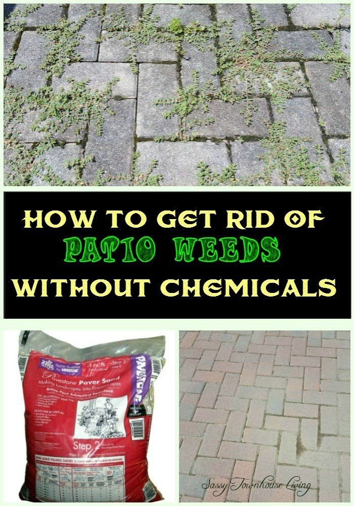 You might want to grab some patio sand at home depot when you see you might want to grab some patio sand at home depot when you see this homeowners brilliant weed removal trick sciox Choice Image