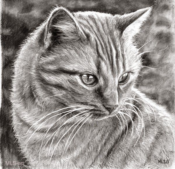 20 Beautiful Realistic Cat Drawings To Inspire You Realistic