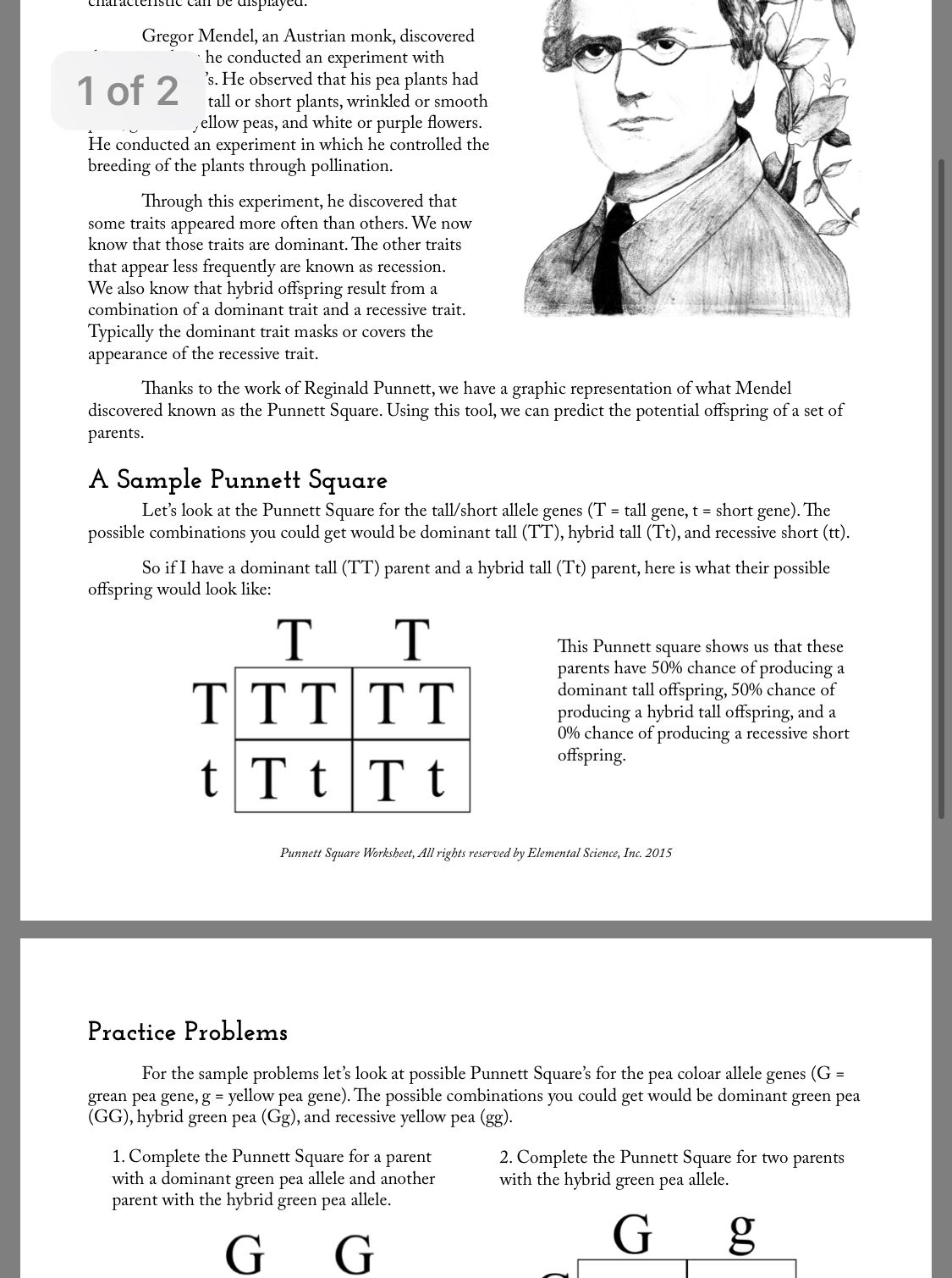 Pin By Pearl On Education Words Punnett Squares Word Search Puzzle