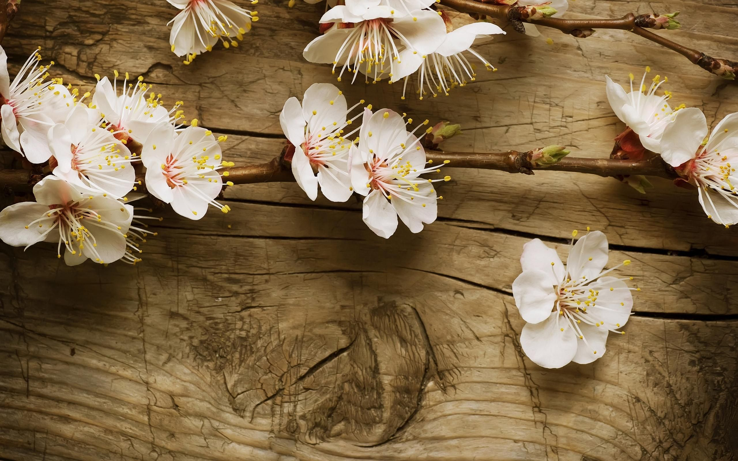 nice cherry blossom wood wallpaper Check more at http://www.finewallpapers.eu/pin/19168/