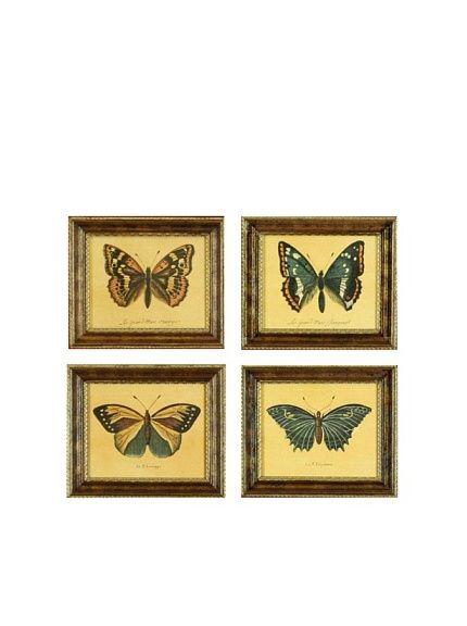 Set of 4 Framed Reproduction Entomological Prints | Entomology ...