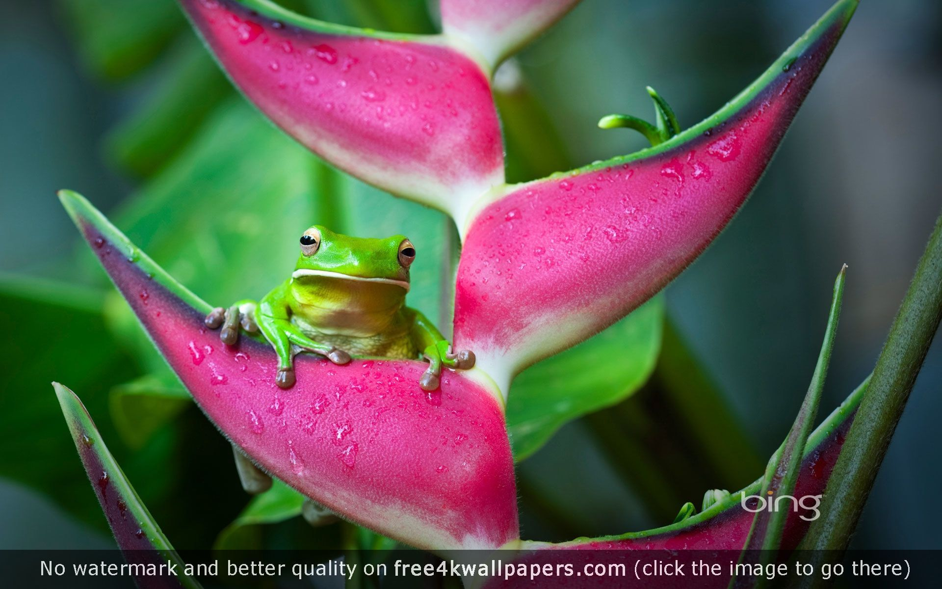 frog 4K wallpapers for your desktop or mobile screen free