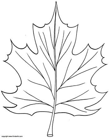 Click Here For Pdf Preschool 4 5 Years Olds Tree The Maple Leaf Coloring Pages