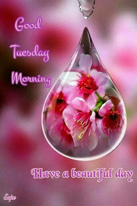 Good Morning All My Sweet Friends I Hope You Have An Awesome