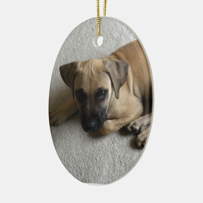Black-mouth cur puppy with blue toy ceramic ornament | Zazzle.com #blackmouthcurdog Black-mouth cur puppy with blue toy ceramic ornament , #ad, #blue#puppy#ceramic#toy #Ad #blackmouthcurdog