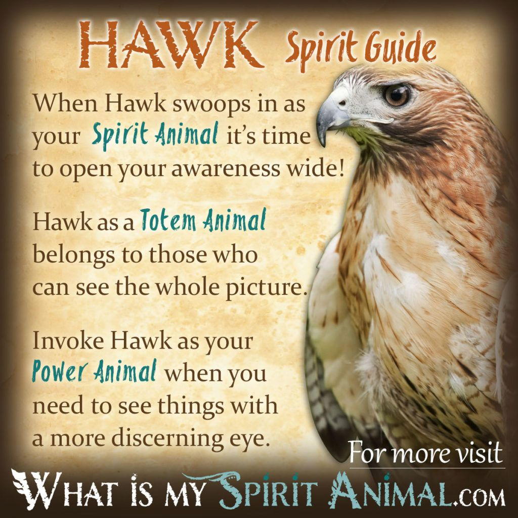Hawk symbolism meaning power animal totems and animal hawk spirit totem power animal symbolism meaning 1200x1200 biocorpaavc