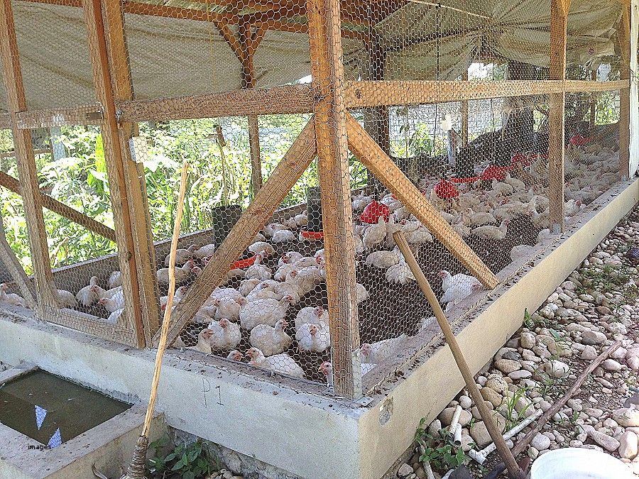 House plan elegant broiler construction common galinheiro
