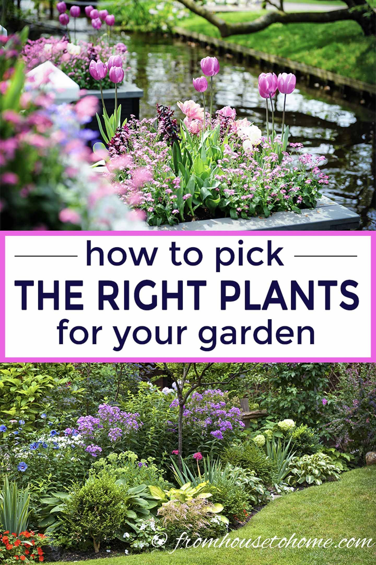 how to choose plants for landscaping your garden | backyard