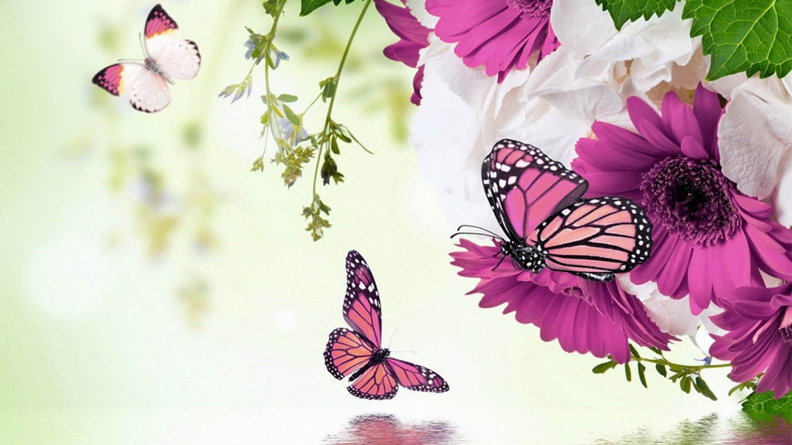Imagenes De Flores Bonitas Para Fondo De Pantalla Imagenes De Flores Hermosas Fondos De Pantalla Pc Papel Pintado De Mariposa Flores Rosa