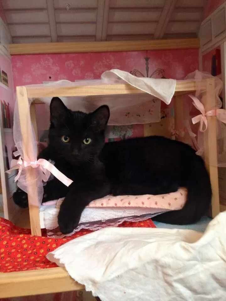 "Cats Who Are Breaking Into Houses — Doll Houses, ""Sorry, Barbie. This is MY bed, now."""