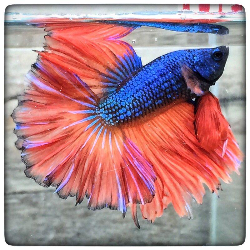AquaBid.com -  Orange & Blue (1766)