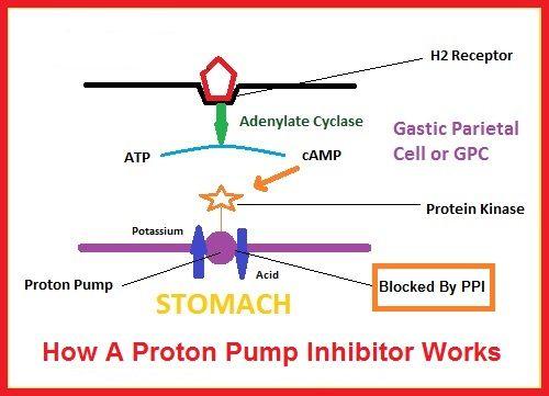 How Do Proton Pump Inhibitor Drugs Work Www Refluxy Com