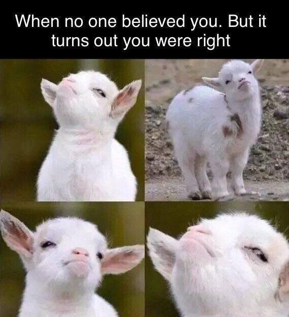 """Latest Funny Memes 29 Miscellaneous Memes And Tweets To Improve Your Day Caption that reads, """"When no one believed you, but it turns out you were right"""" above pics of a baby goat looking smug 5"""