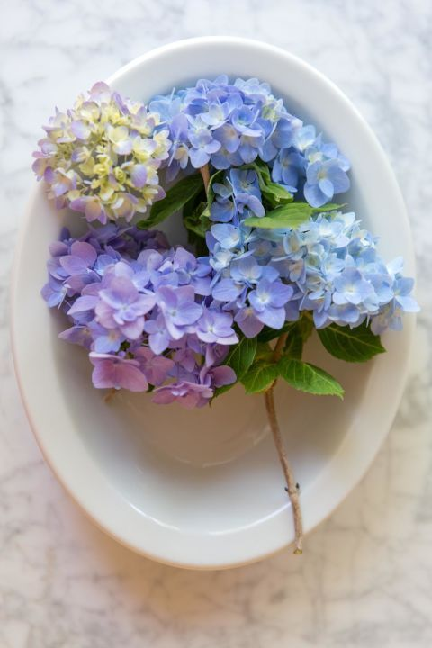 6 Genius Tricks All Hydrangea Lovers Need To Know Potted Hydrangea Care Flower Pots Hydrangea Potted