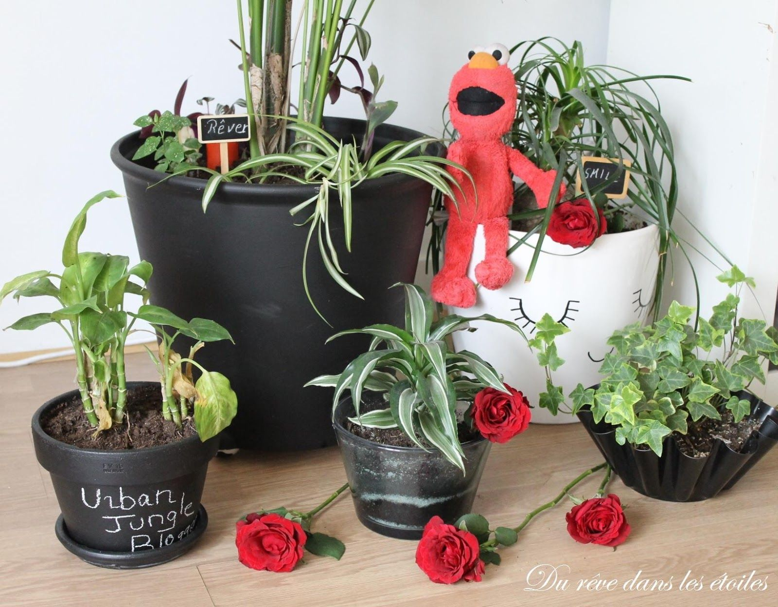 Urban Jungle Bloggers Creative Plant Pots  Du R Ve
