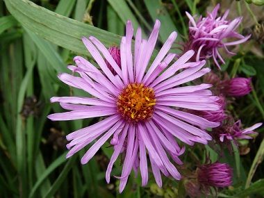 Pin On Edible Weeds And Flowers