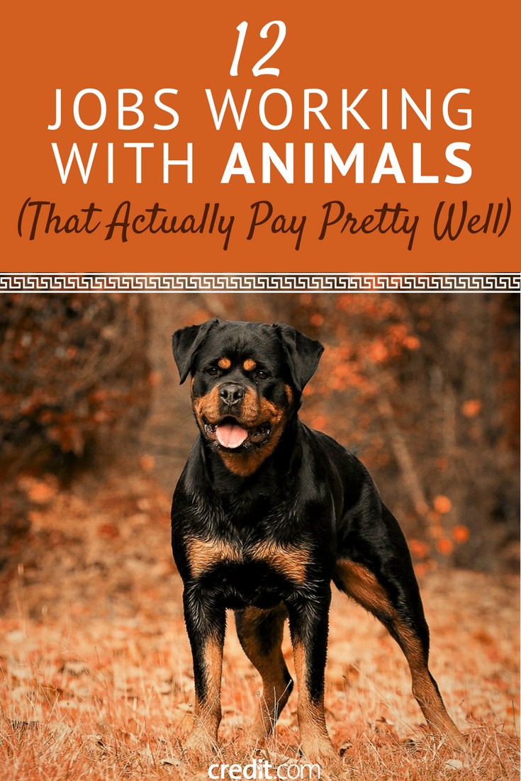 12 Jobs Working With Animals That Actually Pay Pretty Well Getting Paid To Work With Animals J Work With Animals Jobs With Animals Jobs Involving Animals