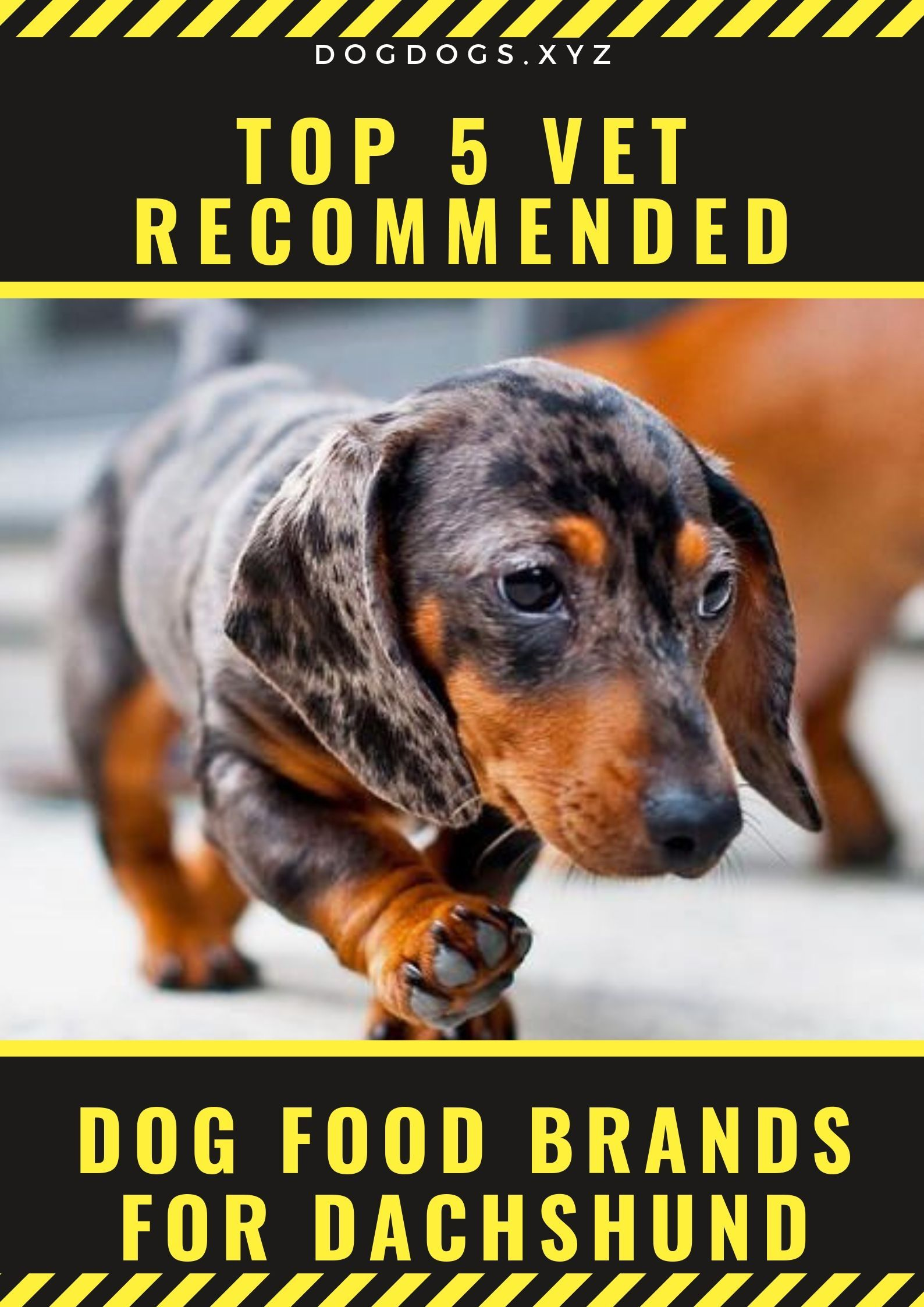 Top 5 Vet Recommended Dog Food Brands For Dachshund Dogs Dog