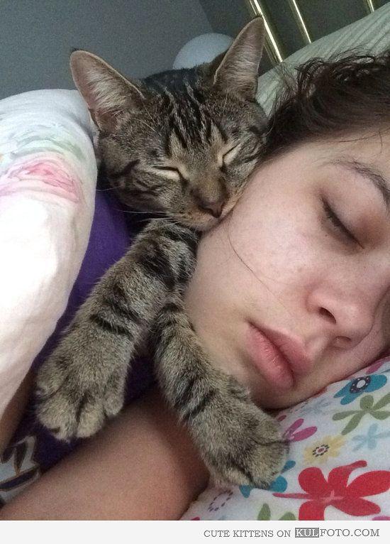Sleepy Kitty Purr Purr Purr Cat Sleeping Cat Owners Cats