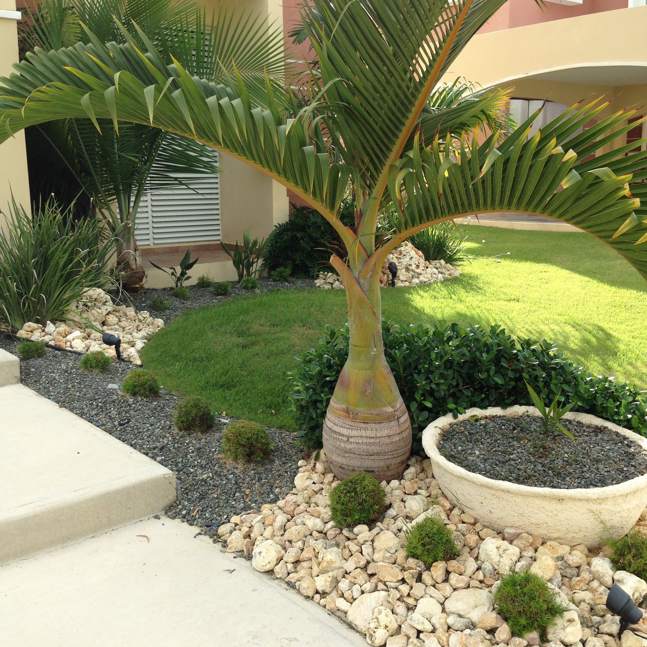 Backyard Landscape Design All Aperto