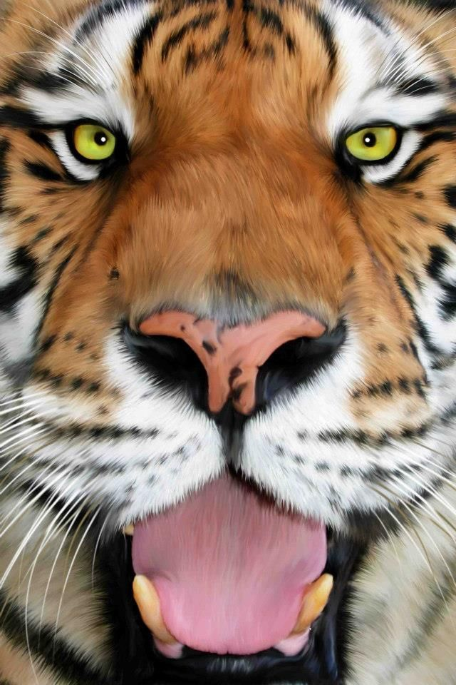 Big Cat Rescue Tampa FL Big cat rescue, Big cats, Wild