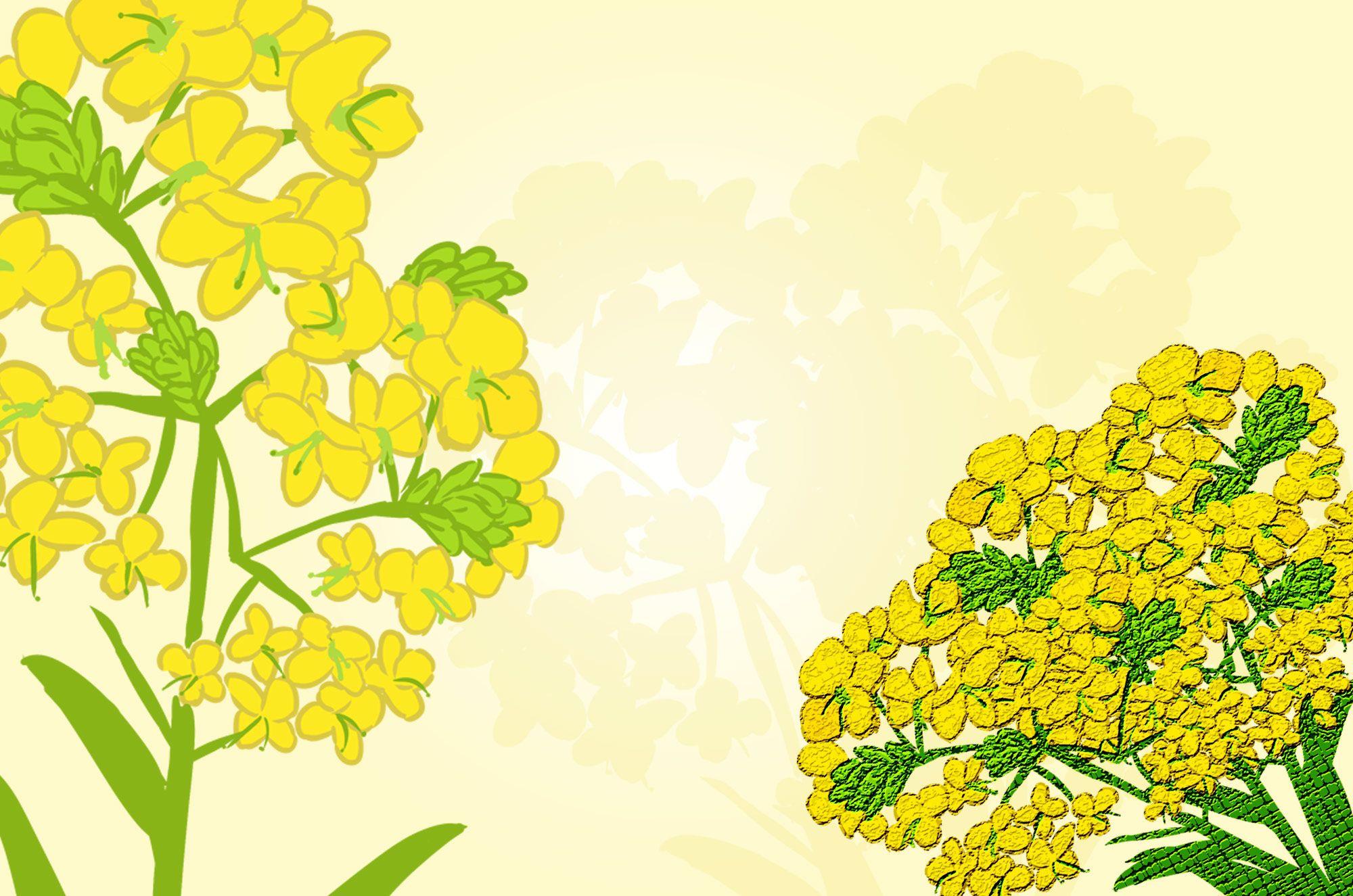菜の花のイラスト素材集。無料で使える黄色可愛い花の素材です!優しい