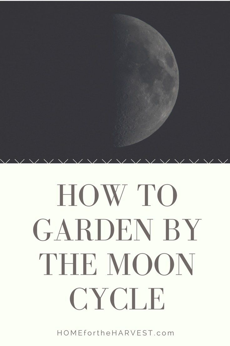Gardening By The Moon How To Align Your Garden With Lunar