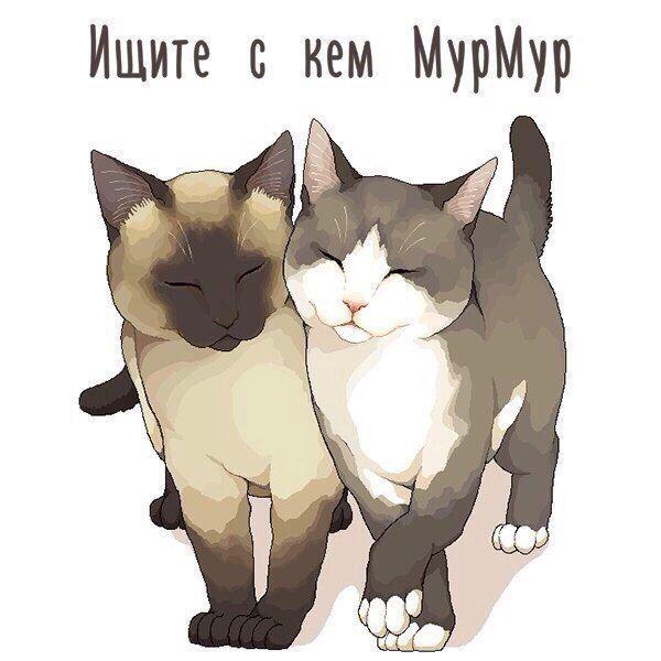 сестру картинки кошек мур секса, больше