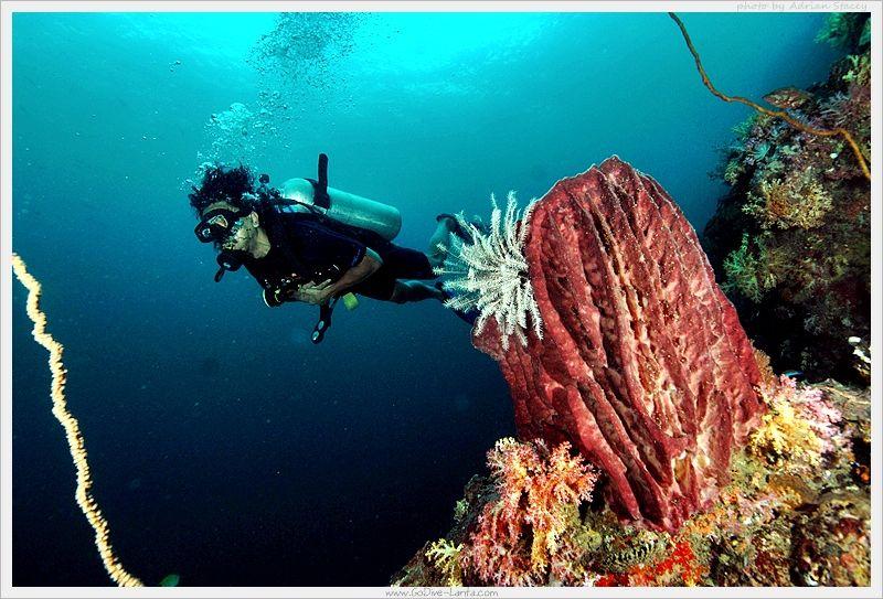 how to go scuba diving