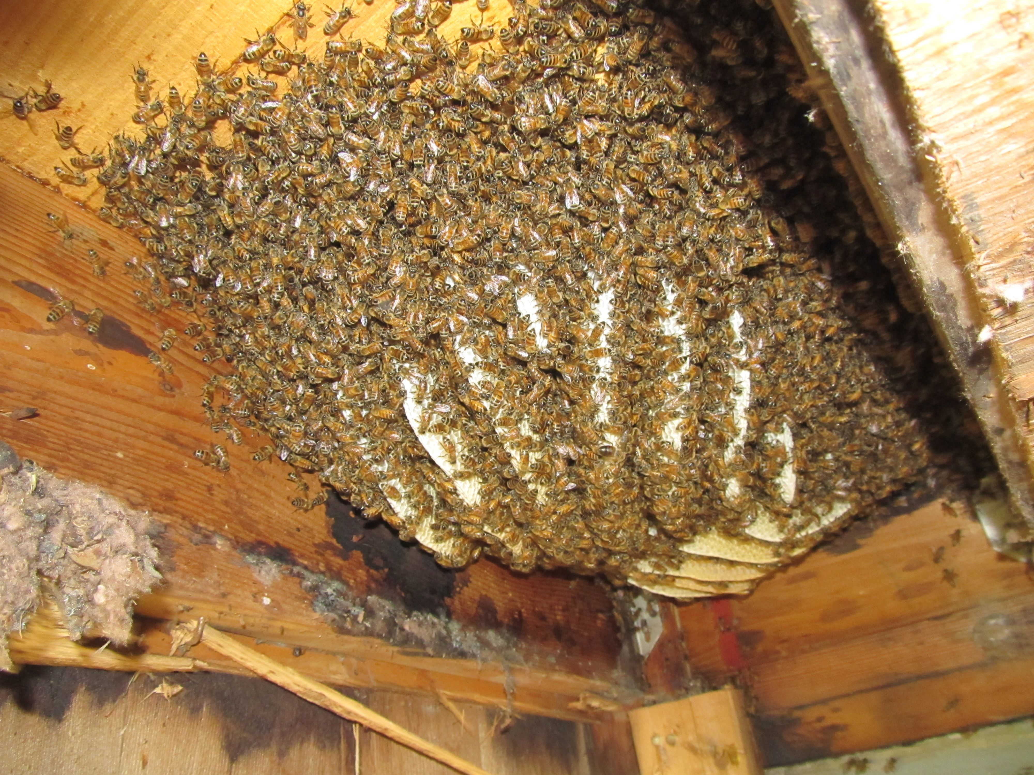 Safe And Natural Ways To Remove Bee Hives Prepper