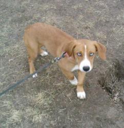 Adopt Nike On Retriever Dog Dogs Animal Rescue