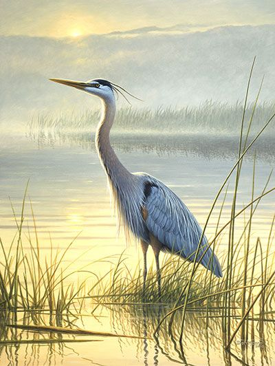 Blue Heron Images Free Google Search Birds Painting Heron Art