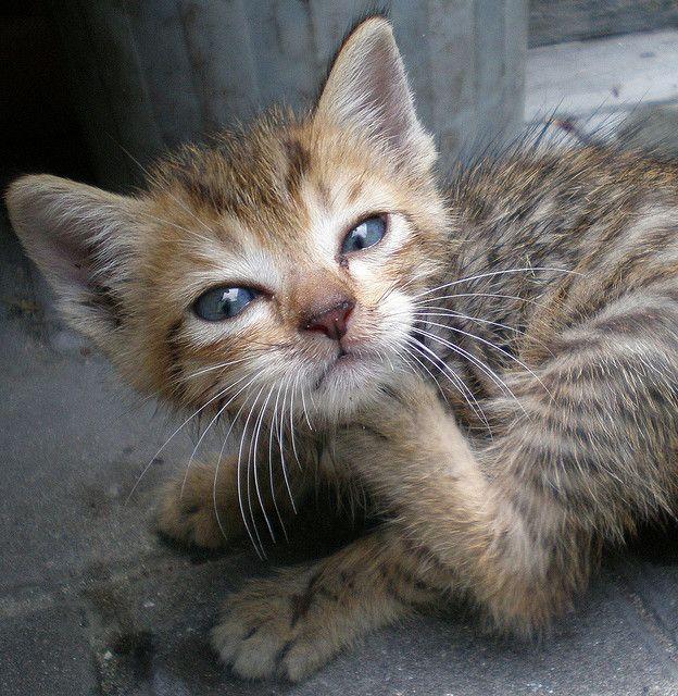 #Cat's Dream  Like,Repin,Share, Thanks!