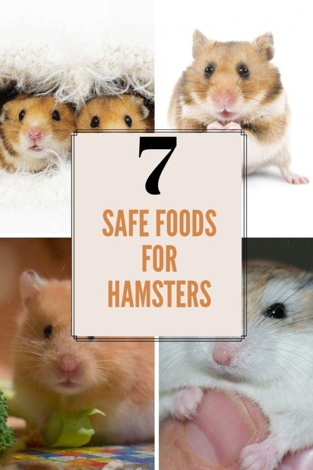 Pin On Hamster Feeding Diet