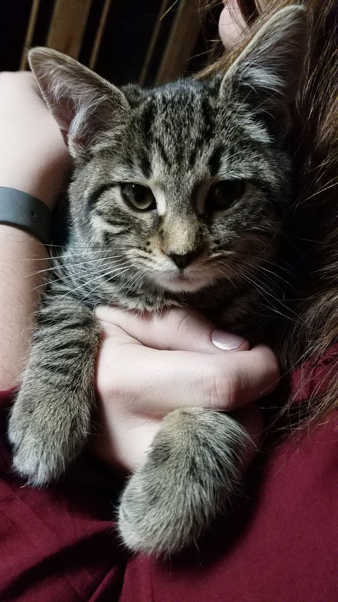 My Girlfriend Just Adopted This Kitten She Finally Decided To Stop Running Around And Let Us Hold Her Http Ift Tt 2a Me As A Girlfriend Cat Day Cute Puppies