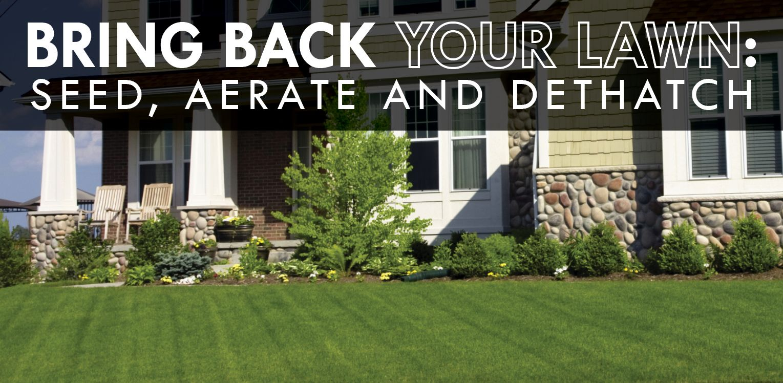 Bring back your lawn seed aerate and dethatch seeding