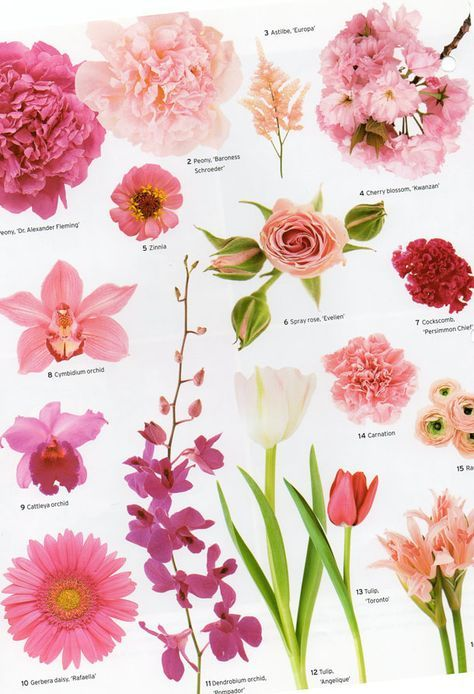 A little flower education for your Wednesday evening, courtesy of Martha Stewart Weddings   Have a good one, and stay warm!    Brilliant Whi    is part of Flowers -
