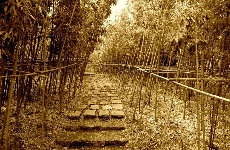 Harv Greenberg Photography - Bamboo Forest - Shanghai, China.