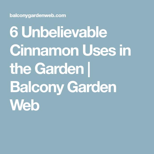 Marvelous 6 Unbelievable Cinnamon Uses In The Garden | Balcony Garden Web