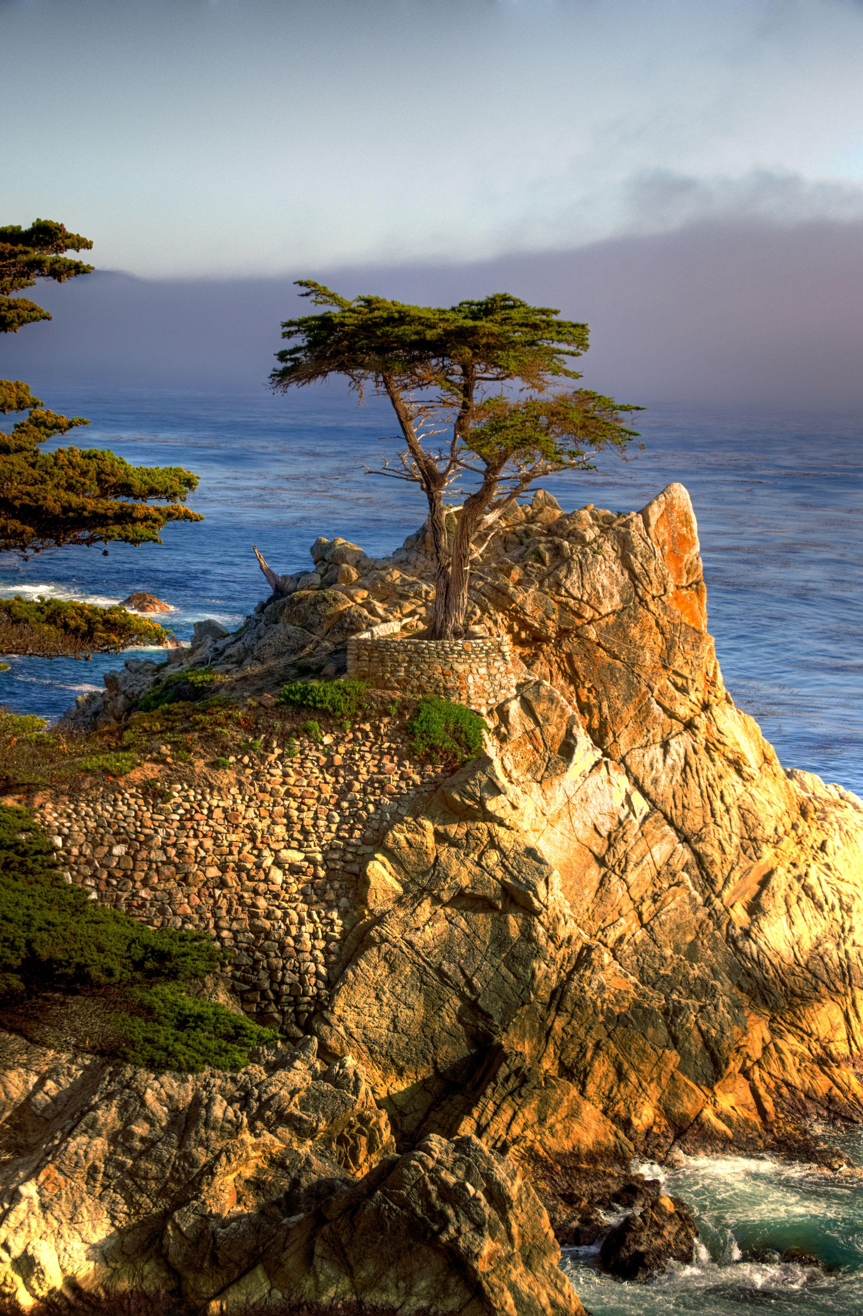 Lone Cypress tree along 17 Mile Drive in Carmel