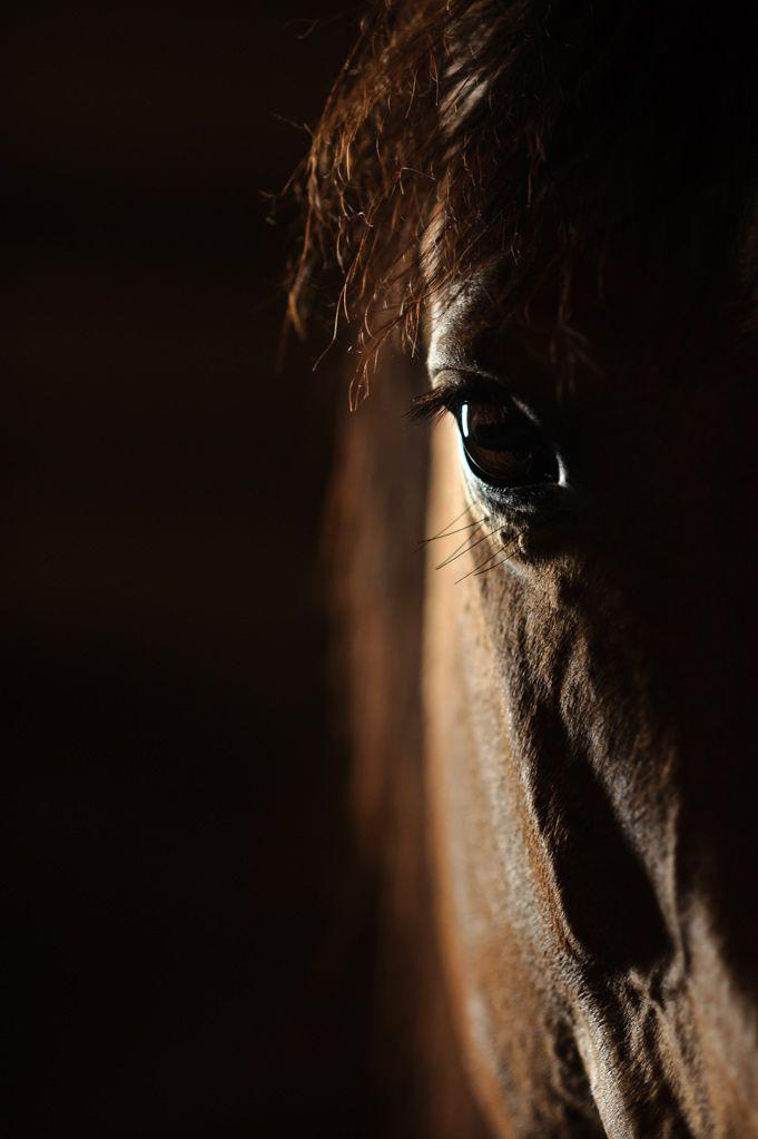 Oeil D Un Cheval Horses Majestic Horse Horse Love