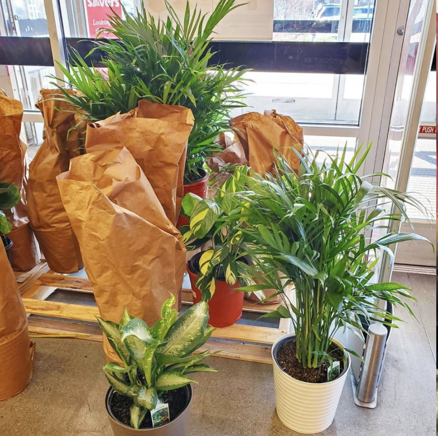 Aldi Is Selling These Giant Tropical Houseplants For Only 400 x 300