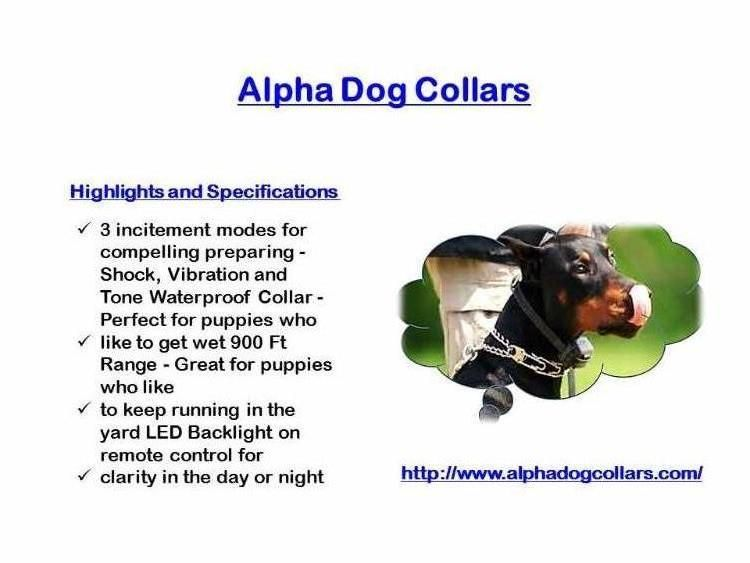 Best Dog Training Collar Alpha Dog Collars Offer Some Of The Best