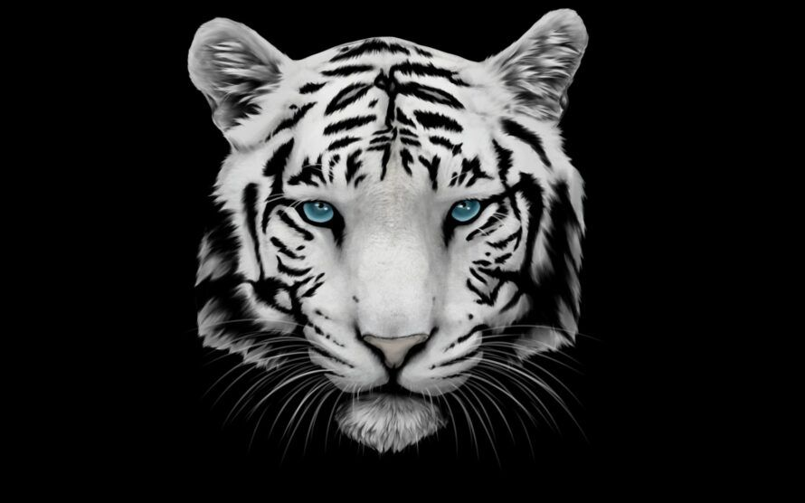White Tiger Black Background 2880 1800 Iphonewallpapers Phonebackground Wallpaperiphone Iphone In 2020 Tiger Wallpaper Tiger Images White Tiger