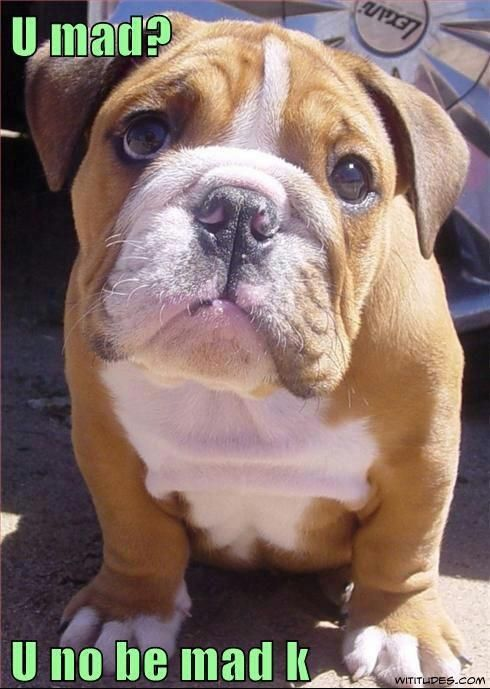 Pooch Are You Mad At Me Funny Dog Pictures Baby Dogs Bulldog