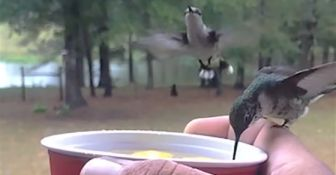 This Close Up Footage Of Tiny Hummingbirds Drinking Is The Biggest Delight To Watch.