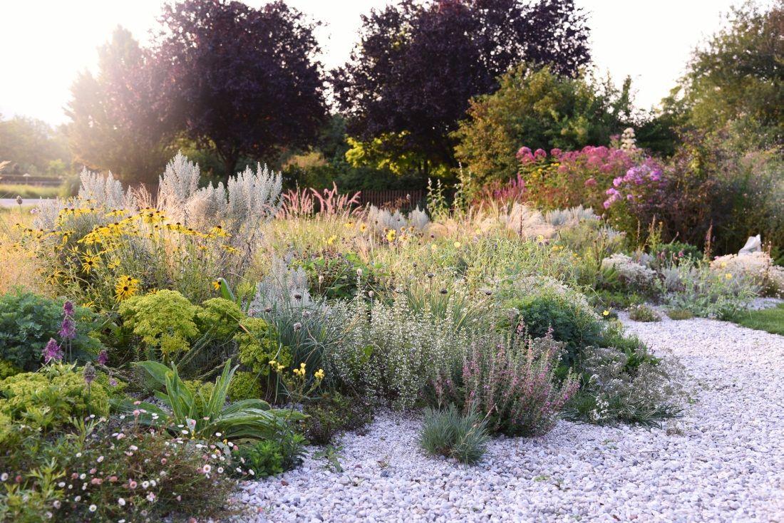 Storchschnabel Und Andere Stauden Own Garden Garten Stauden Und