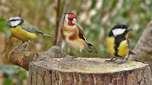 Bird sounds, birds in winter, Bird feeding in winter, birds